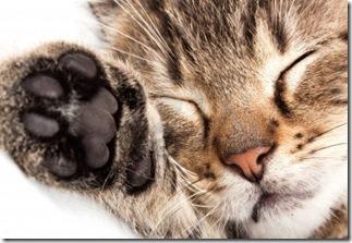 quanto-dorme-un-gatto