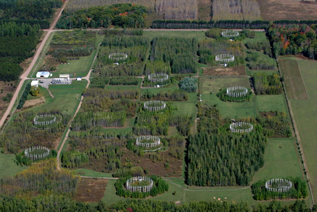 An aerial view of the Aspen Free-Air Carbon dioxide and ozone Enrichment (Aspen FACE) experiment site once located near Rhinelander, Wisconsin. The circular plots consist of aspen and birch trees, surrounded by PVC pipes that allowed scientists to vent carbon dioxide and ozone gas into the air around the trees. Photo: Rick Anderson / Skypixs Aerials