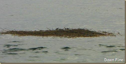 BwBTC Plum Island_044