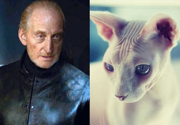 E se os personagens de Game of Thrones fossem gatos 8