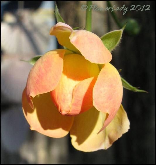 01-22-phyllis-bide