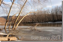 Susquehann River ice jam, by Sue Reno, Image 6