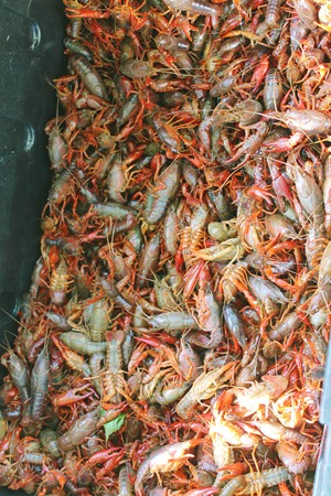 Crawfish and more 072