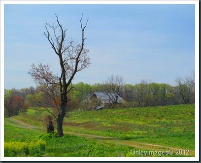 farms041112 (18)