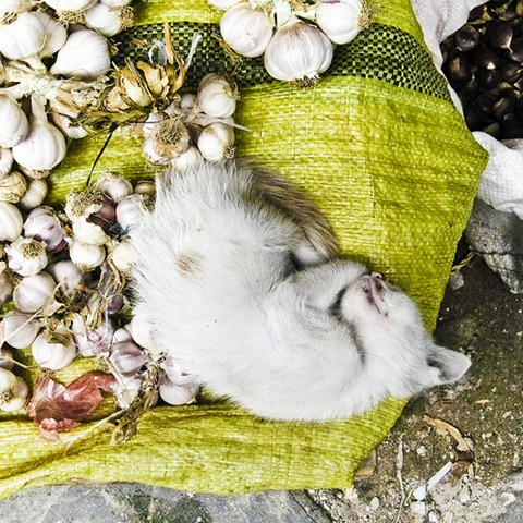 Curled up with the onions