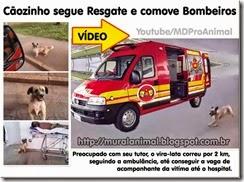 caozinho_viatura_bombeiros_thumb[1]
