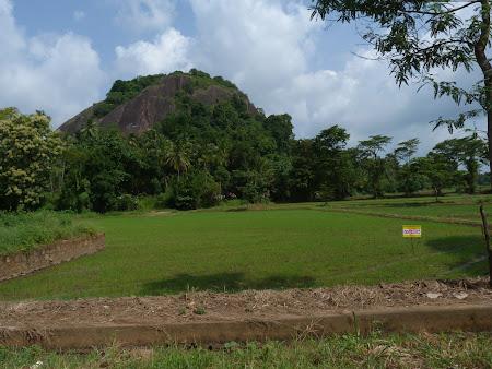 Campuri de orez Sri Lanka