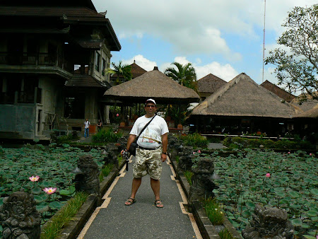 Bali travel: A pond with lilies
