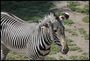 Zoo5 040