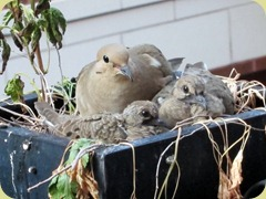Birds 004