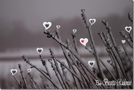 20120214_hearts