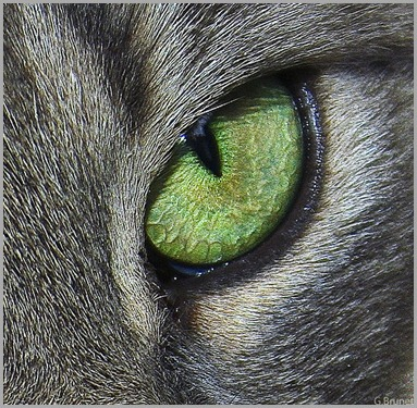 green-cat-eye