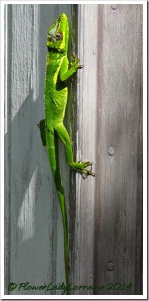 08-10-lizard2