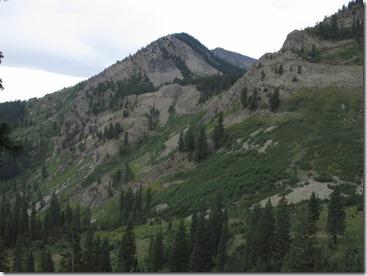 558 near tree line (640x480)