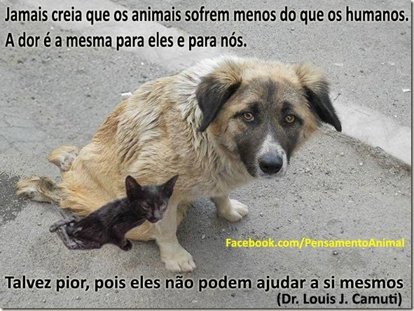 ajuda-animais