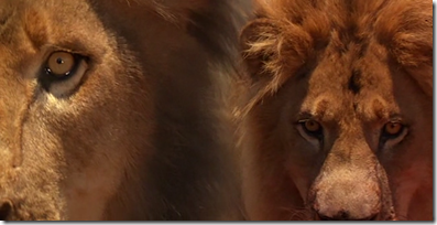 lions split diopter