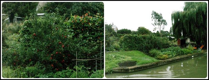 Fruit of Garden