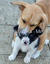 Glória Ishizaka - Meu filhote Pluto - 44
