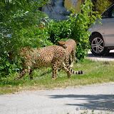 Safaripark_130527-021.JPG