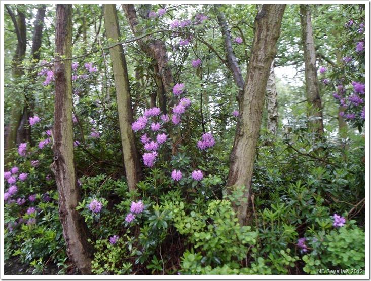 SAM_0640 Ravenshaw Wood