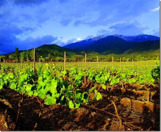 vinhos-chile-vinho-e-delicias