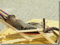 tanning cat