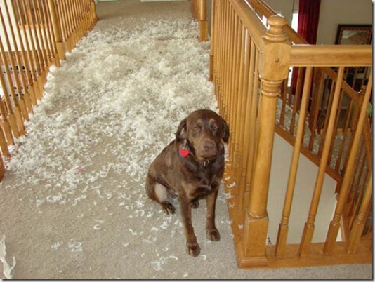 funny-cats-dogs-destroy-house-015
