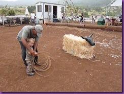 horse rescue 059