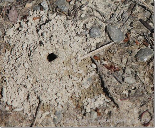 39-mining-bee-hole