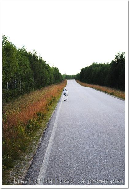 finland 2010 210