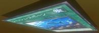 300px-FishSpawn-JP-Anime-ZX