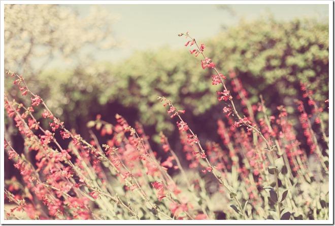 Wildflower Center Apr 2 035-1_edited-1