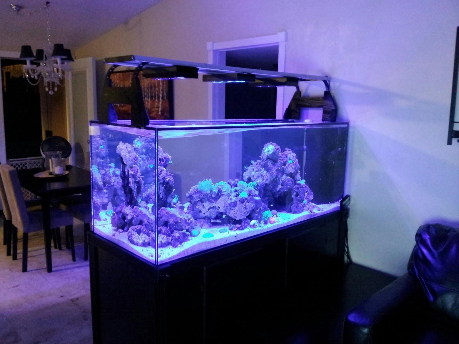 Coralchopper S Fishy Stuff Ai Hydra Versus Vega