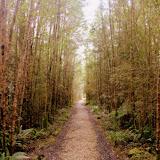 The Walk to the Oparara Arch - Karamea, New Zealand