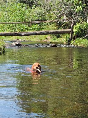 Dogs Trekking 6 (233)