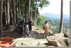 Durian Penang 004