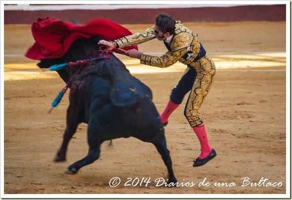 Toros 2014 (1)-13