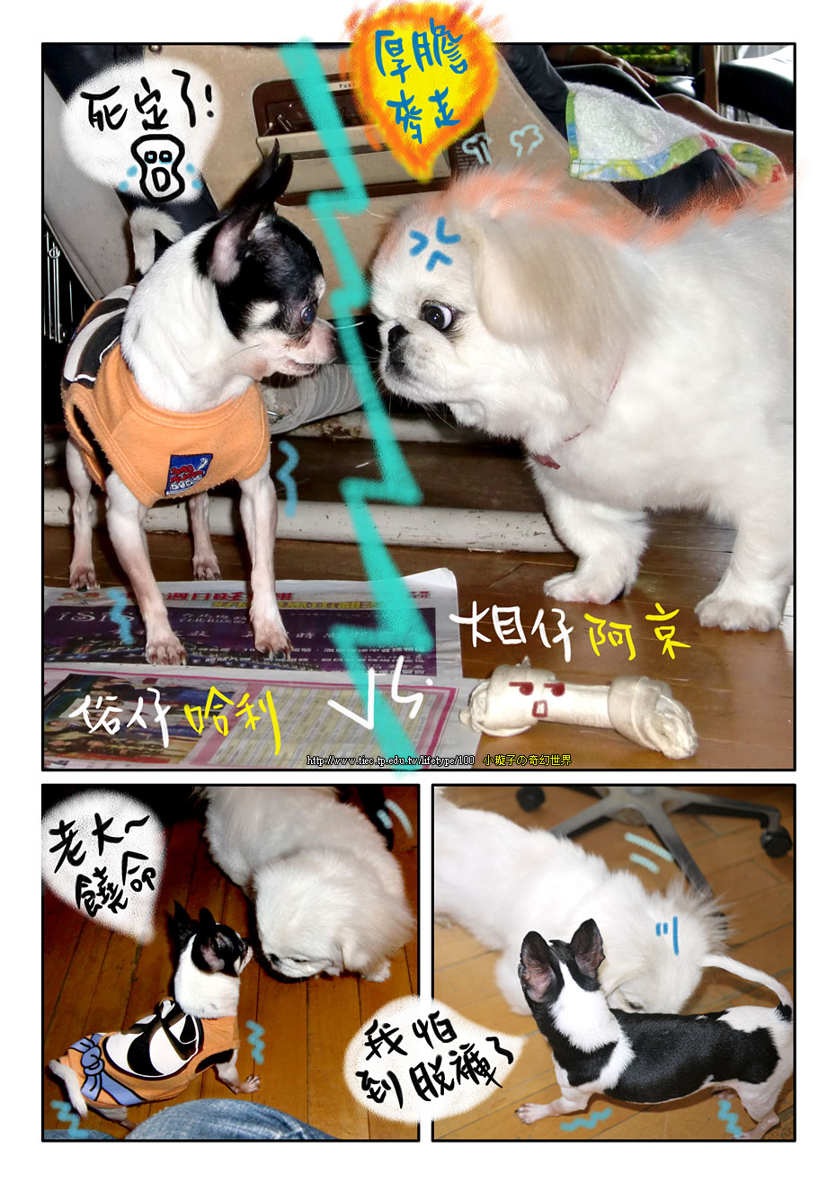 dog_blog7.jpg