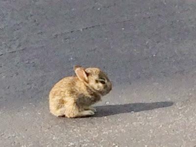 2014 09 15 Baby bunny