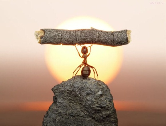 Life-of-Ants-Andrey-Pavlov-02