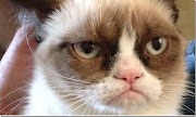 """S/he is all over the internet in """"Grumpy Cat"""" memes, they are pretty funny."""