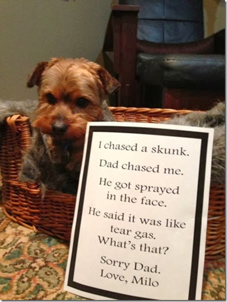 dogs-dirty-secrets-18