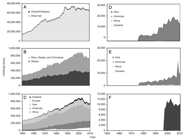 Global landings trends. (A) Reported landings of wild-caught bony fish and Chondrichthyes, as derived from FAO landings data. (B) Reported FAO landings of sharks versus other Chondrichthyes (rays, skates and chimaeras). (C) Reported landings of Chondrichthyes by region. (D) Trade in shark fin imports and (E) exports as reported by FAO. (F) Trade data for shark fin imports to Hong Kong as reported by the Government of Hong Kong Department of Aquaculture and Fisheries. Graphic: Worm, et al., 2013