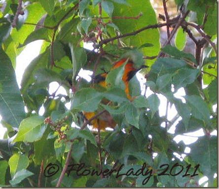 06-13-inkn-bird3