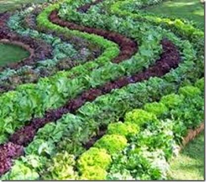 fall_vegetable_garden