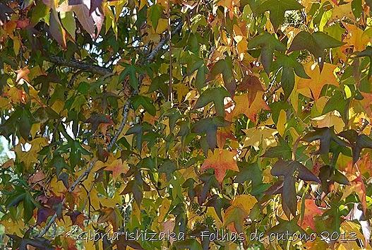 6  Glória Ishizaka - Folhas de Outono 2013