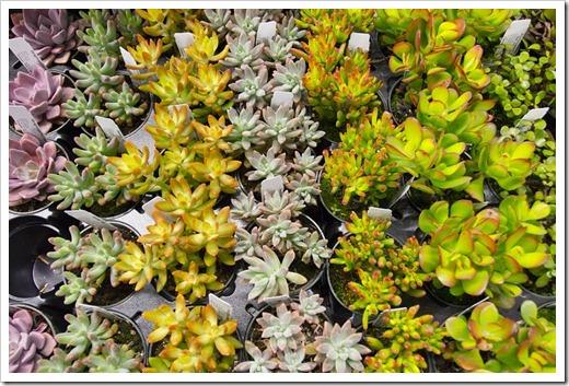 120321_SF_Flower Garden_Show_55