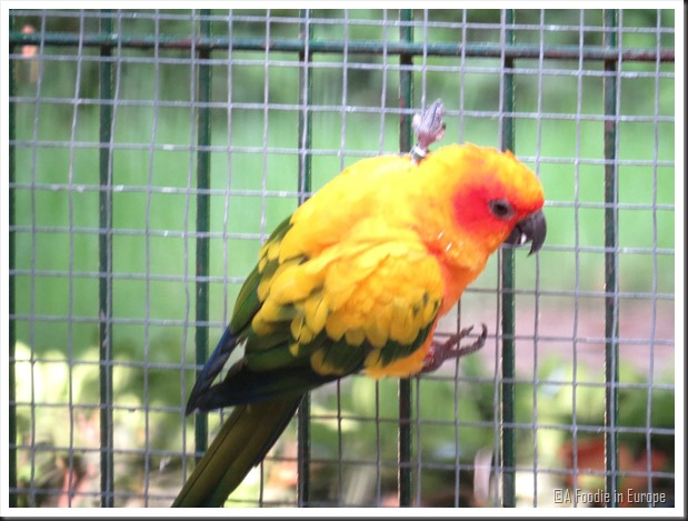 colorful parrot blurry