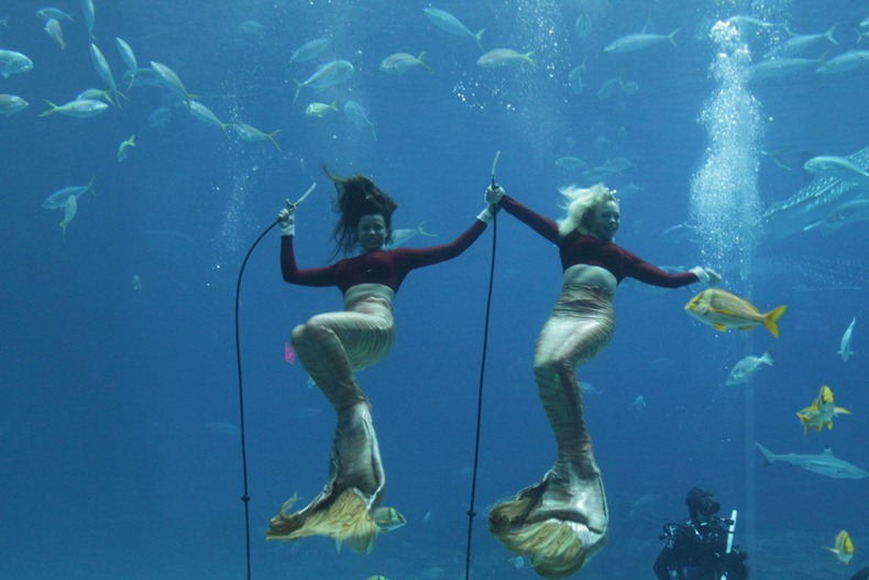 weeki-wachee-mermaids-4