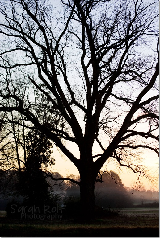 tree-silhoutte-at-dawn